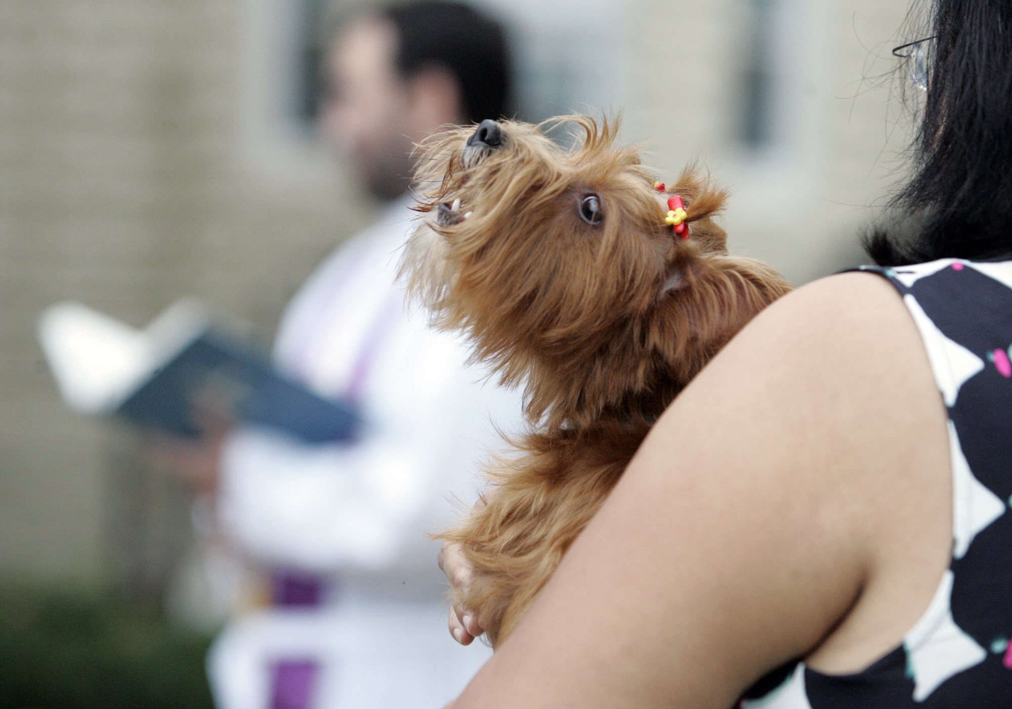 Koreans are spending big on their pets. (AP)