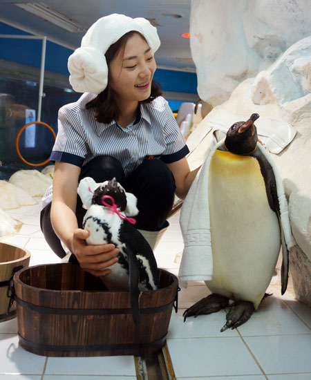 A Hanwha Aquarium staffer bathes penguins at 63 Sea World in Yeouido, Seoul, Friday. The aquarium said that it has begun preparations for colder weather. (Yonhap)