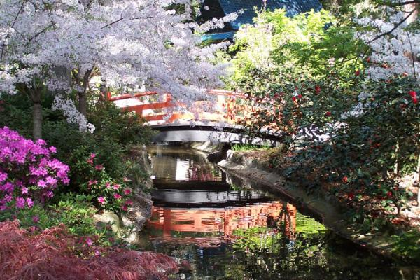 cherry blossom bridge painting by ash hussein - Japanese Garden Cherry Blossom Paintings