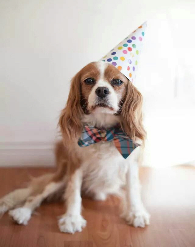 Dogs and cats in Los Angeles have a reason to celebrate.