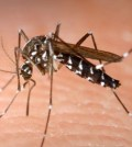 Health officials said 20 people in the county have been diagnosed with West Nile virus, including three people who showed no symptoms but were identified when they donated blood. (Korea Times file)