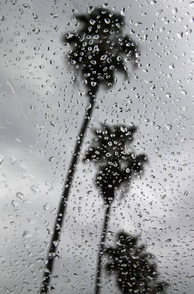 Palm trees along La Jolla Shores in San Diego are seen through a window covered with rain drops as the area braces for an approaching storm Tuesday, Dec. 2, 2014. Heavy rain from a powerful Pacific storm swept through California on Tuesday, providing some relief from a three-year drought. (AP Photo/Gregory Bull)