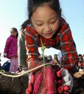 Children enjoy an event at a farm in Seoul to harvest sweet potatoes. (Yonhap)