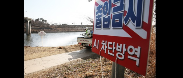 A member of a quarantine team sprays disinfectant into Jungnang Stream in Seoul, where an outbreak of the bird flu virus was confirmed, Sunday. (Yonhap)