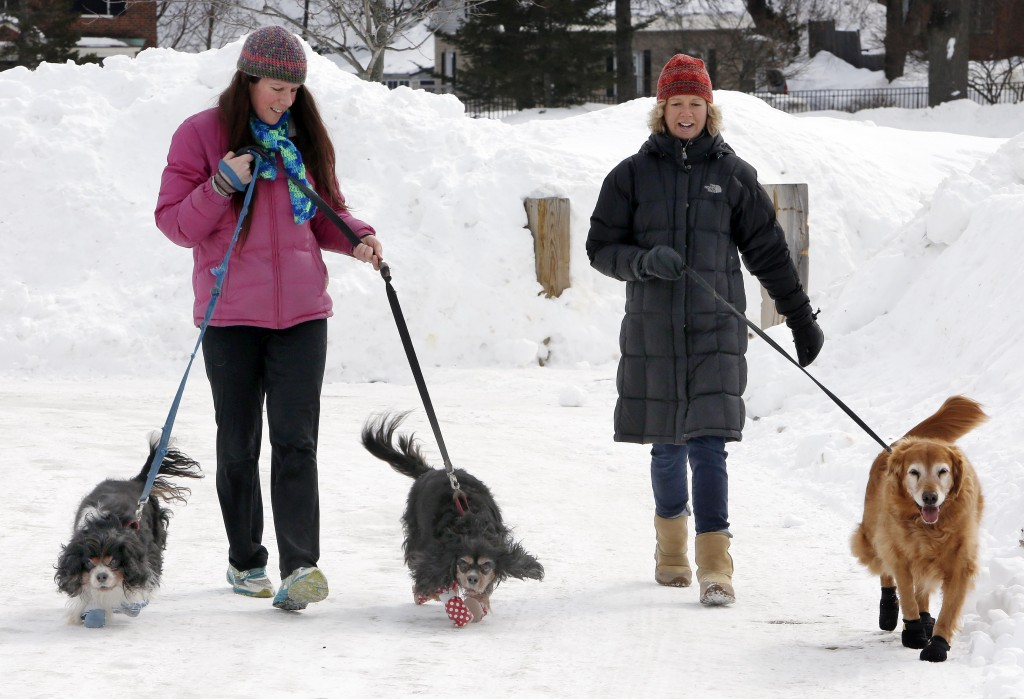 In this Sunday, March 1, 2015 photo, Malia Ebel, left, walks her dogs, Seymour, left, and Sanders, both Cavalier King Charles spaniel mixes, alongside Wendy Olcott and her golden retriever, Sunny, as each dog wears winter booties, in Concord, N.H. A harsh winter across the country has pet owners buying the boots to protect their pets' paws. (AP Photo/Jim Cole)