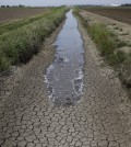 In this May 1, 2014 photo, irrigation water runs along the dried-up ditch between the rice farms to provide water for the rice fields in Richvale, Calif.  (AP Photo/Jae C. Hong)