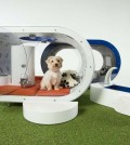 "Samsung's $30,000 ""Dream Doghouse"" (Courtesy of Samsung)"