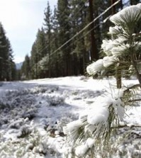 Snow is shown on a tree and on the ground in South Lake Tahoe, Calif., Monday, April 6, 2015. In the wake of an incredibly warm March, an unusually cold spring storm is rolling in. The strong and wet storm that will linger in Northern California through mid-week will do little to help the fix the drought. (AP Photo/Tahoe Daily Tribune, Isaac Brambila)