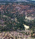 A ridge on Laguna Mountain in the Cleveland National Forest is covered with dead Jeffrey pine trees, foreground, with a recent fire scar in the background. (Courtesy of U.S. Forest Service)