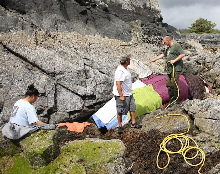 Researchers and volunteers help kept the killer whale cool until the high tide returned.(Courtesy of Whale Point/Facebook)