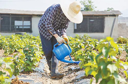Kim Min-young, a former mobile engineer at a large conglomerate in Seoul, waters his blackcurrants in Gyeongju, North Gyeongsang Province. (Courtesy of Park Chang-hee)