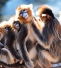 Monkeys groom each other at a zoo at Everland in Yongin, Gyeonggi Province, Monday. (Korea Times photo by Shim Hyun-chul)