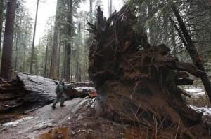 Drive Thru Sequoia